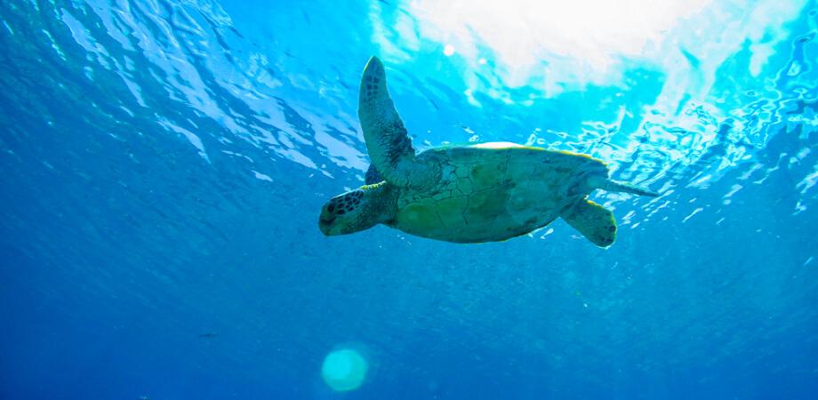 日本が世界に誇れる海がココ『沖縄』にはあります。