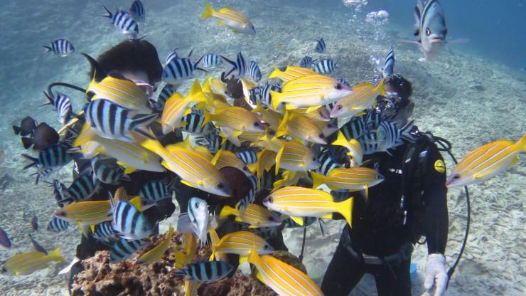 透明度抜群の海で魚に囲まれる