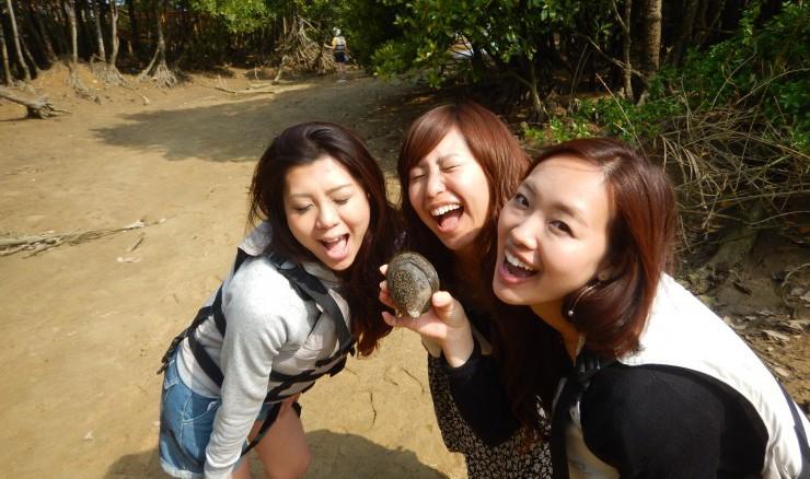 巨大なマングローブシジミ(シレナシジミ)