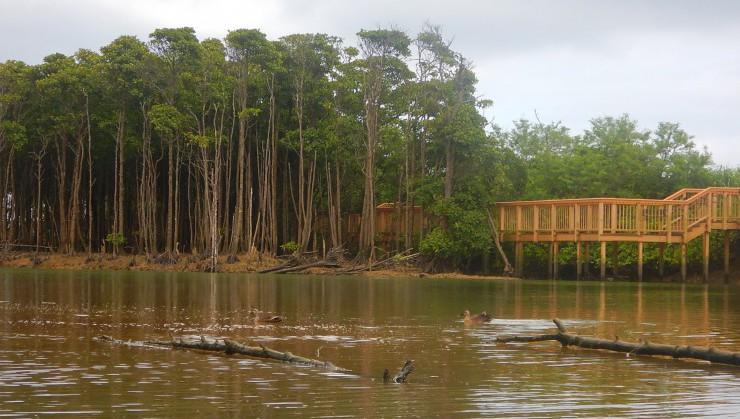 マングローブ林を水面散歩