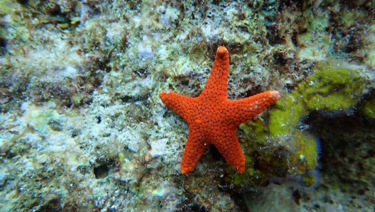 ★☆Starfish☆★