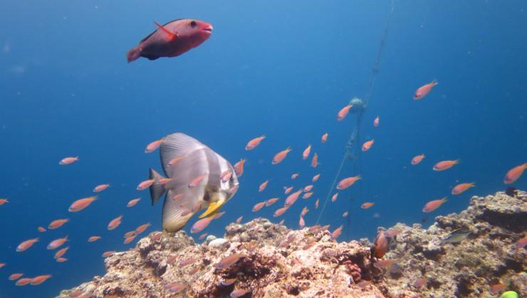 自然の美ら海水族館