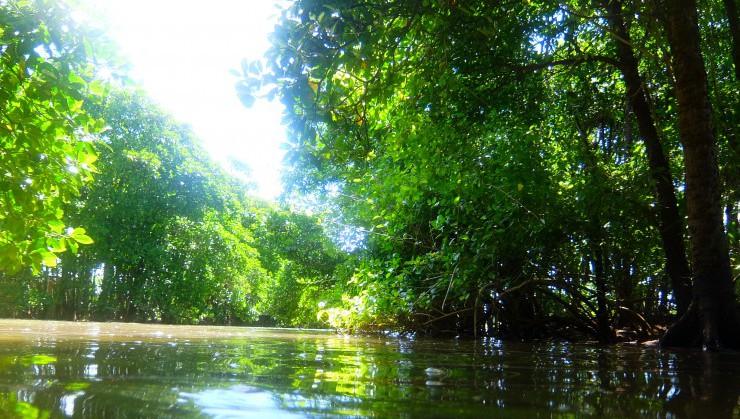 涼しくもあり夏らしさも味わえるマングローブ林