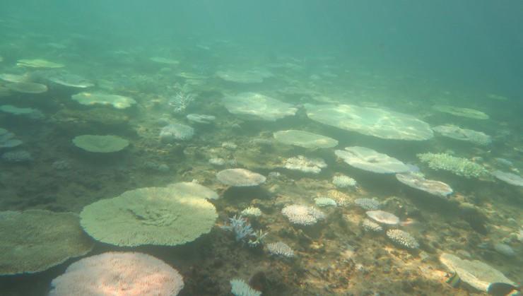 朝日を浴びる珊瑚