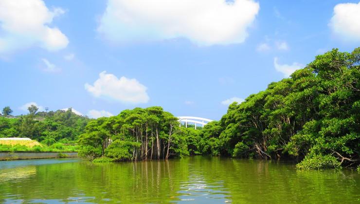 やっぱり沖縄にマングローブは似合いますね