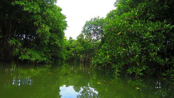 マングローブ林のある億首川