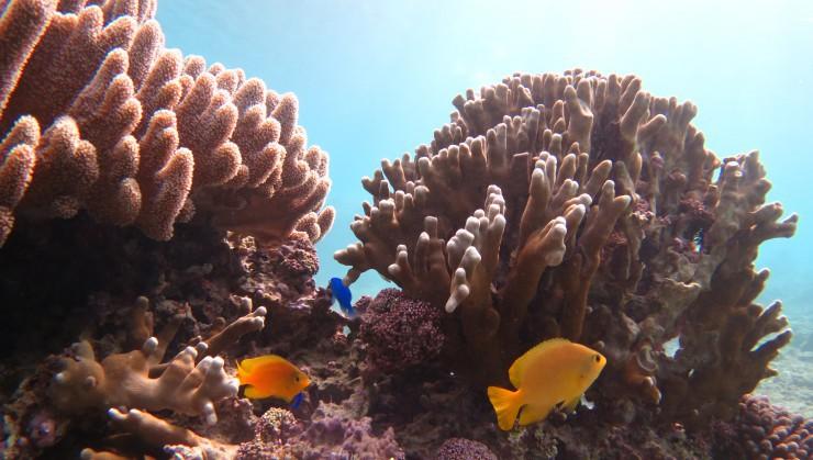 綺麗な珊瑚礁がお出迎えします!