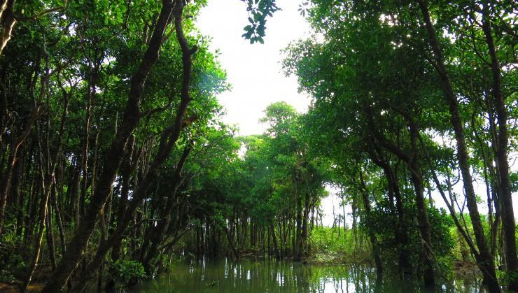 マングローブ林の中を行く