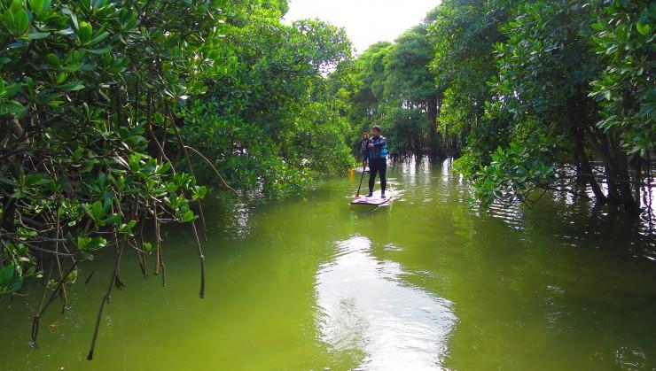マングローブ林の中でSUP