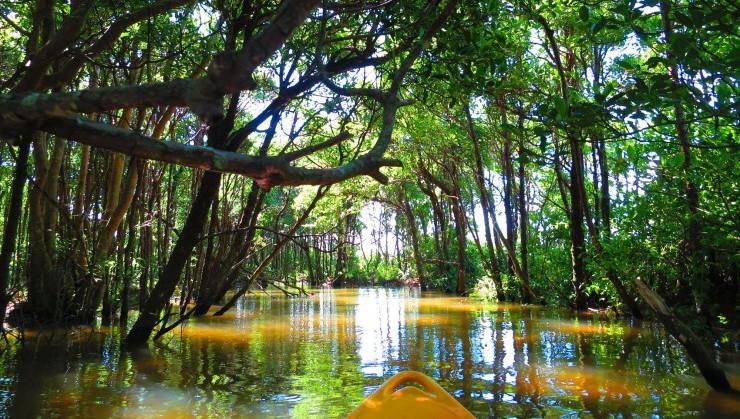 本日もマングローブ林を漕ぎ進
