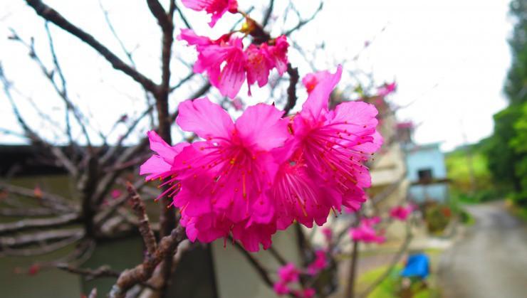 桜前線南下中