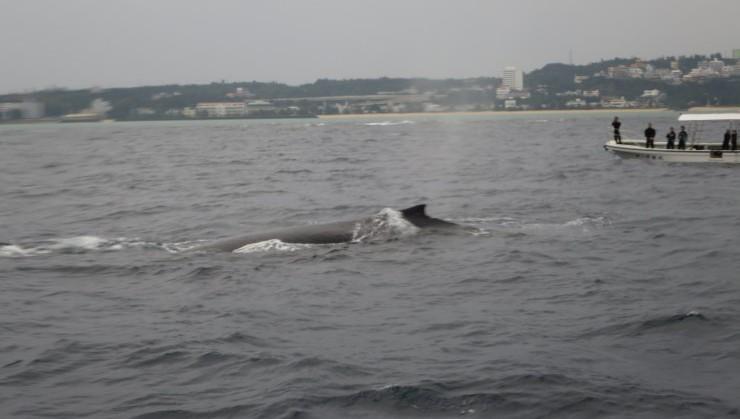ツアーの帰りにクジラに遭遇!大迫力!!