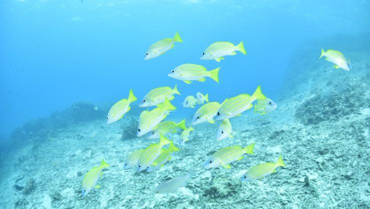 透明度最高~美ら海~
