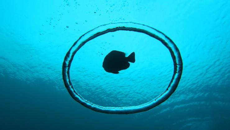 バブルリングと魚影が作り出す神秘的な空間