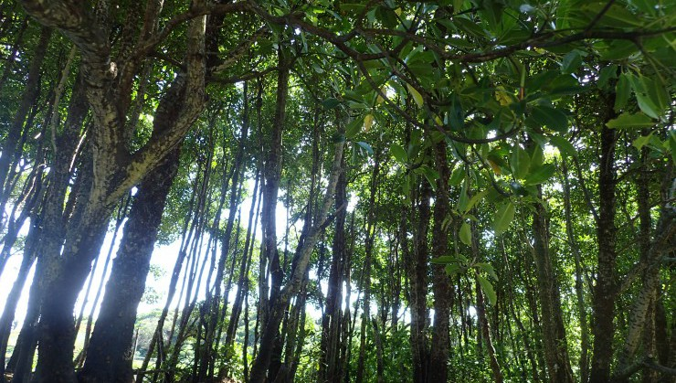 暑いときはマングローブの下でひと休憩・・・