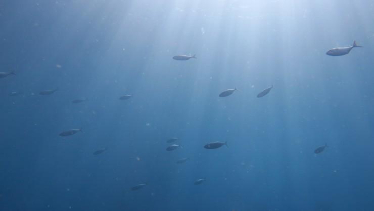 光の中を泳ぐ