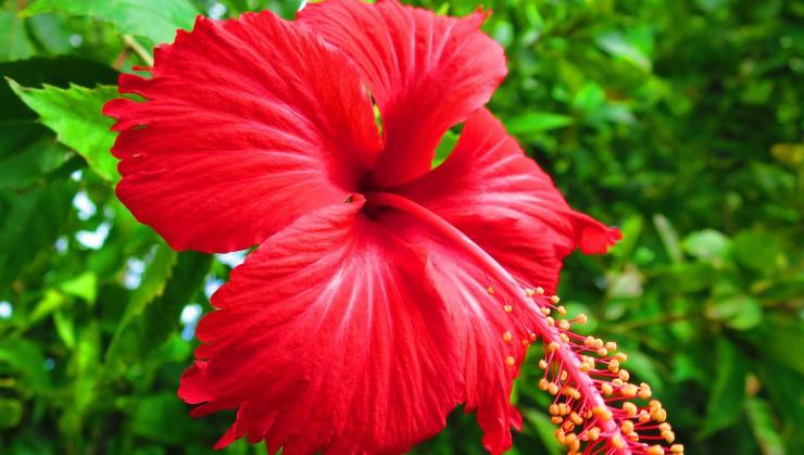 夏の終わりに真っ赤に咲くアカバナー