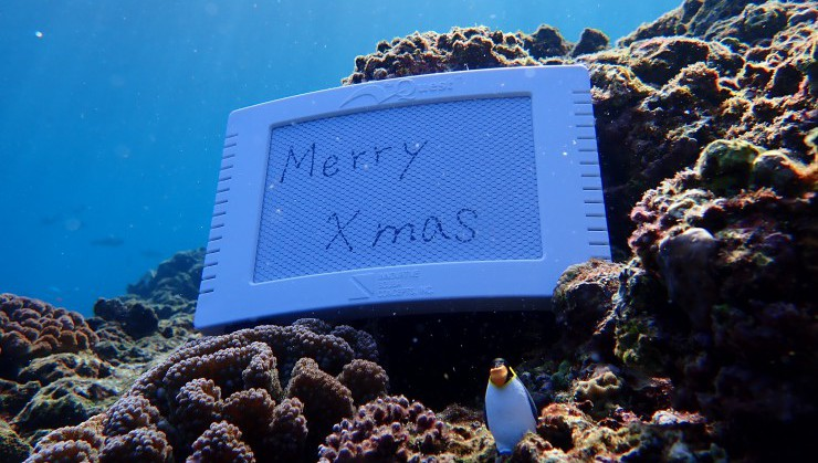 (海中からメリークリスマス)