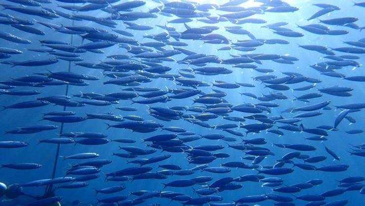 (魚の渋滞)