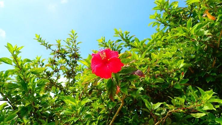 (風に負けず咲く花)