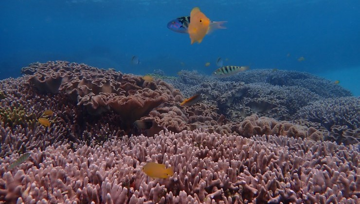 (フワフワ珊瑚と小さな住魚たち)